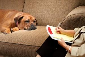 Animal psychopathology