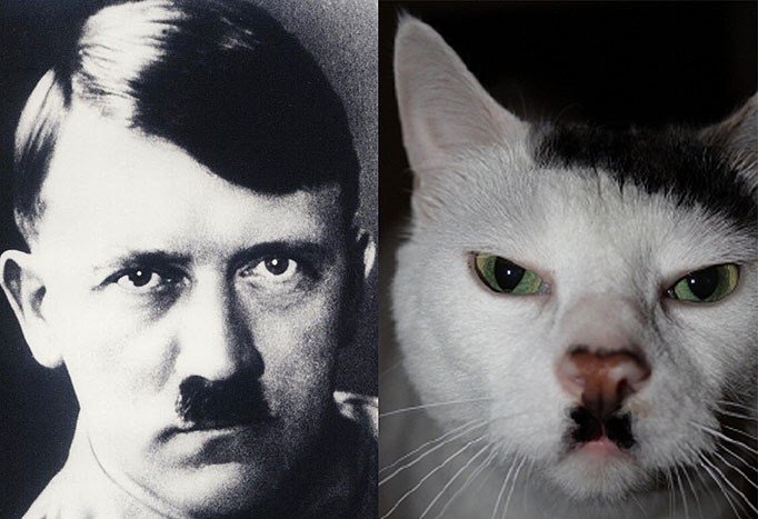 23-Adolf-Hilter-Fear-of-Cats